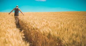 Glutenfreies Getreide